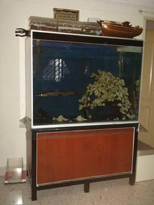 3 ft high used fish tank for sale singapore region for Used fish tanks for sale