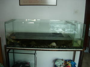 Big 4ft Fish Tank Aquarium For Cheap Sale With Stand