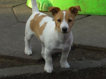 Free Ads Dogs For Sale Swansea