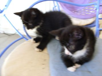 House Cats For Sale Bristol